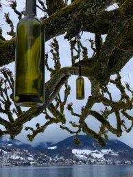 Flaschenbaum Tegernsee Aussicht