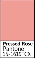 Pressed Rose.jpg