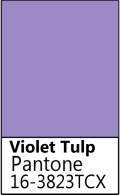 Violet Tulp.jpg